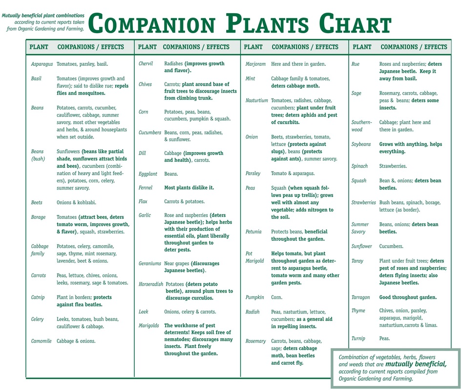 companion planting smart health talk