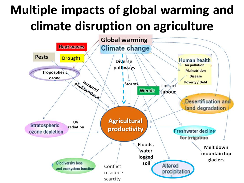 global warming can affect our future ability to produce food